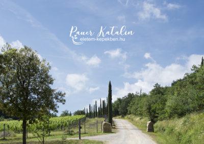 Panzanelli bírtok a Chianti borvidéken