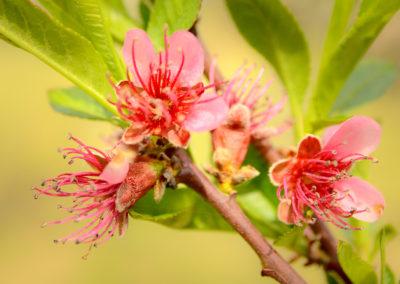 Tavaszi virágbaborulás
