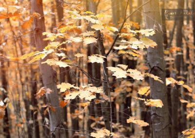 A még fennmaradt őszi levelek