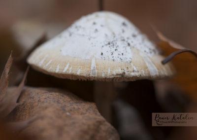 Autumn, forest, tree, mushroom